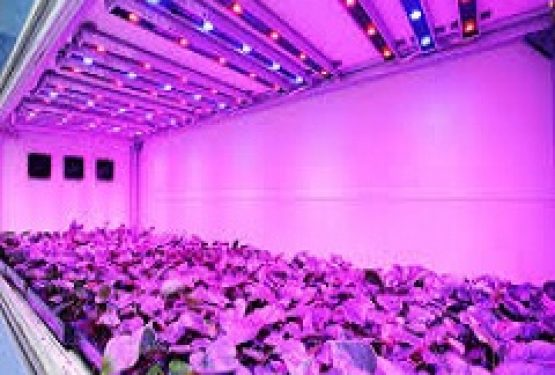 Global LED Grow Lights Market (2015-2021) – Business Planning Research and Resources, Supply and Revenue