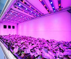 LED Grow Lights Market