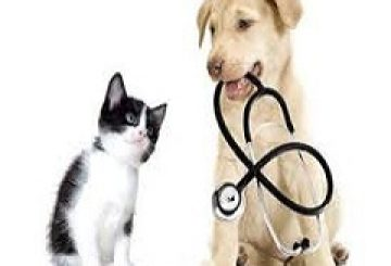 Global Pet Insurance Market 2017 : Strategy Resources, Manufacturers, Supply and Forecasts to 2018