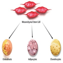 Mesenchymal Stem Cells Market