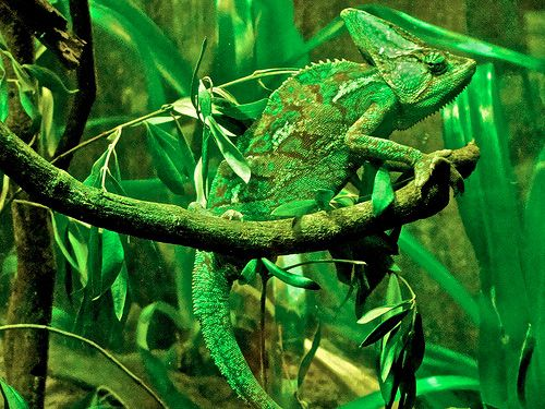 Nanoparticles Mimic the Camouflage Nature of Chameleons