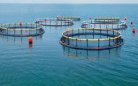 Aquaculture Cages Market